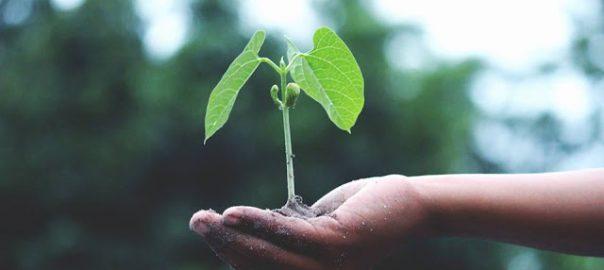 Kiełkowanie nasion egzotycznych – przewodnik